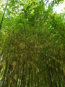 Zumbihl-Florence-Natur-Sommer-2018-Bambus