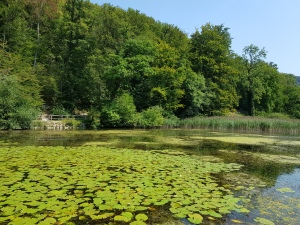 Zumbihl-Florence-Natur-Sommer-2018-Ermitage-Teich