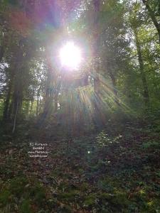Zumbihl-Florence-Natur-Sommer-2018-Ermitage