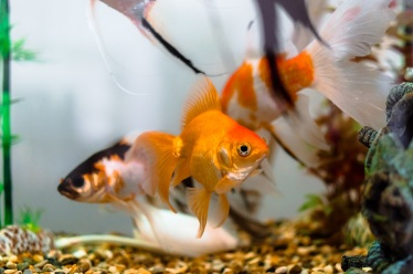 aquariums-1867308