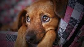 dog-3071334