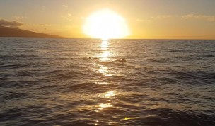 Delfine im Sonnenaufgang La Gomera Retreat Mai 2019